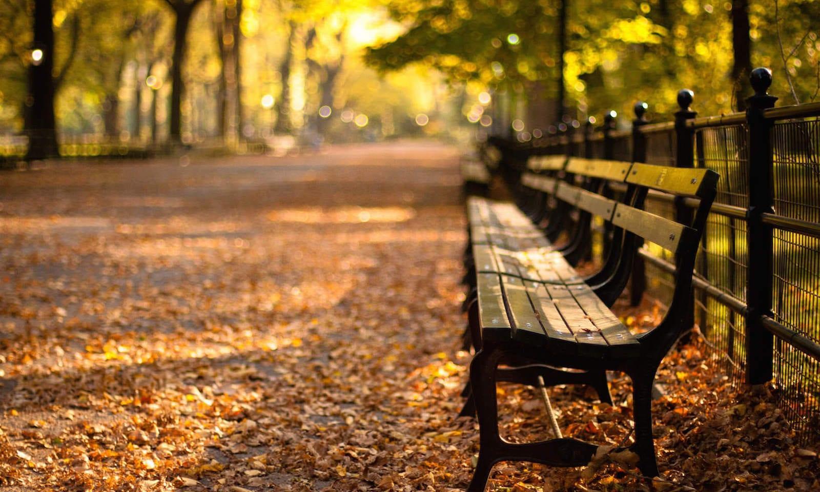 Der Central Park In New York: Die Besten Spots & Insider