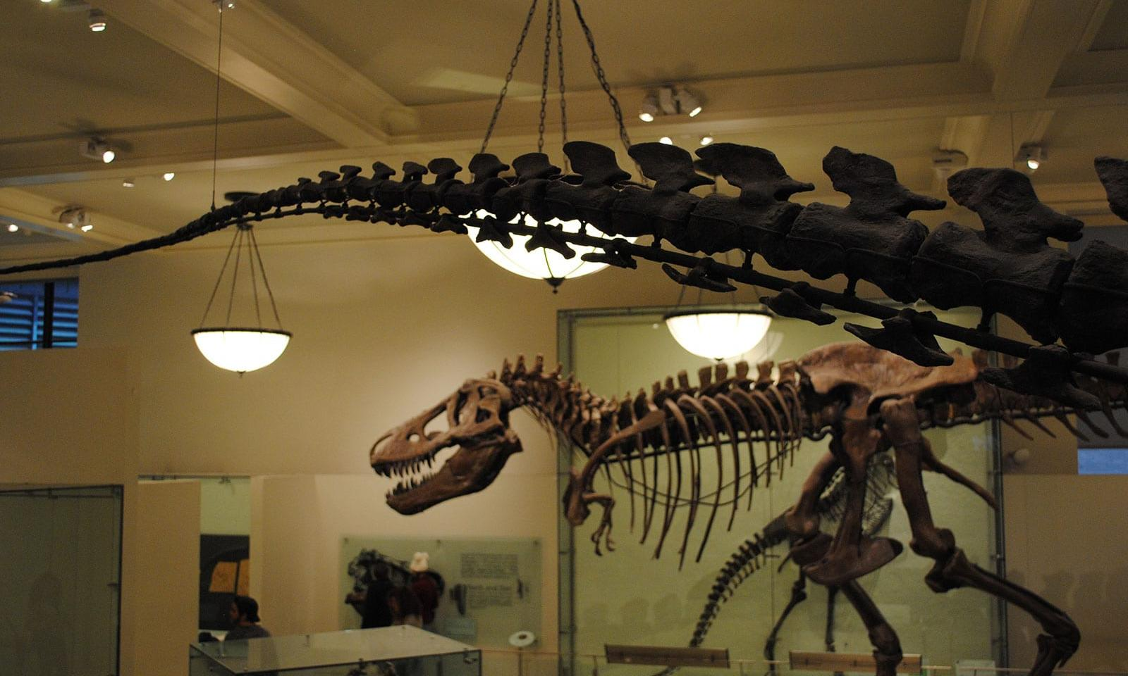 5 Highlights im Museum of Natural History