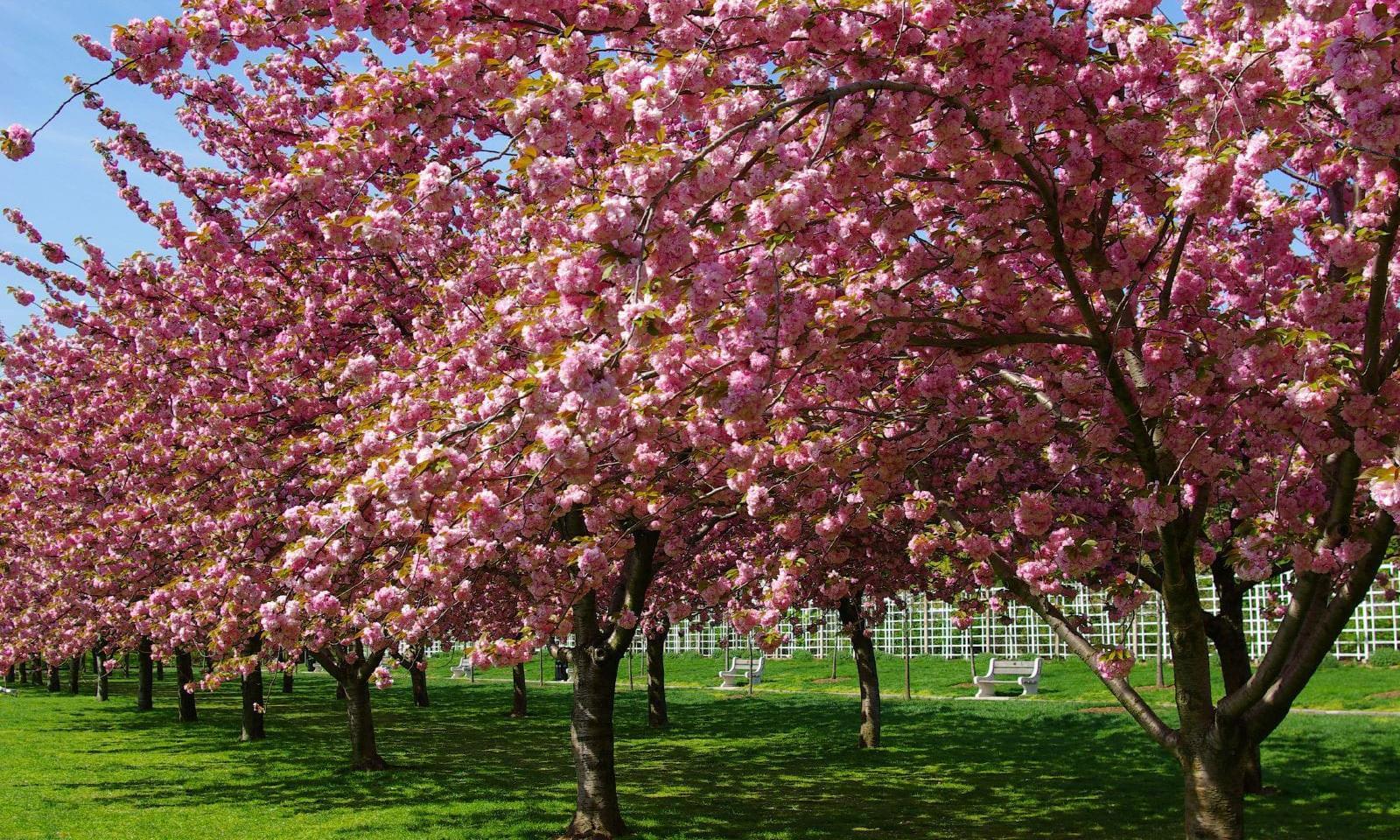 Der-Brooklyn-Botanic-Garden