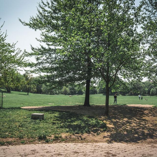 Prospect Park in Brooklyn