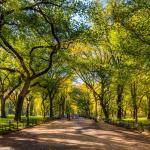Ein perfekter Tag im Central Park