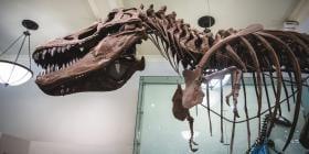 Dinosaurio esqueleto en el Museo de Historia Natural de Nueva York